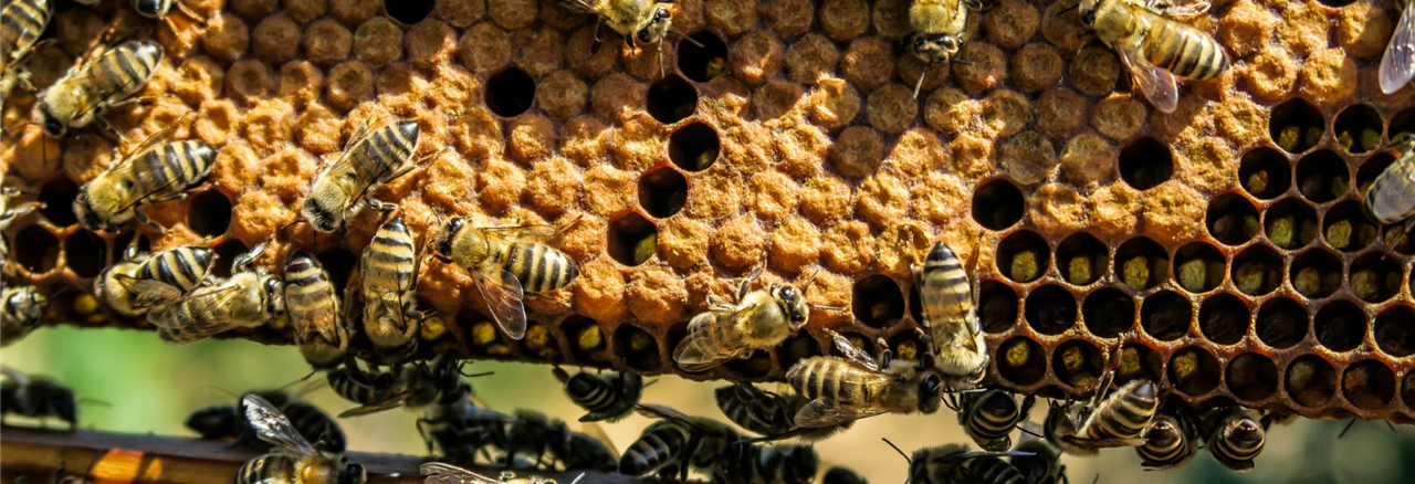 Collectif abeilles